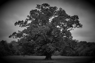 High def wallpaper of old tree in black and white.