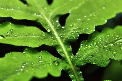 High Def desktop background of green leaf with water drops.
