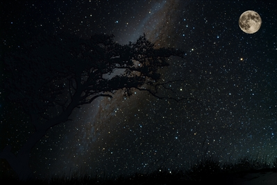 normal_HD_milkyway_moon_tree_silhouette_wallpaper.jpg