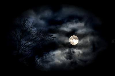 normal_HD_tree_moon_bats_clouds_halloween_wallpaper.jpg